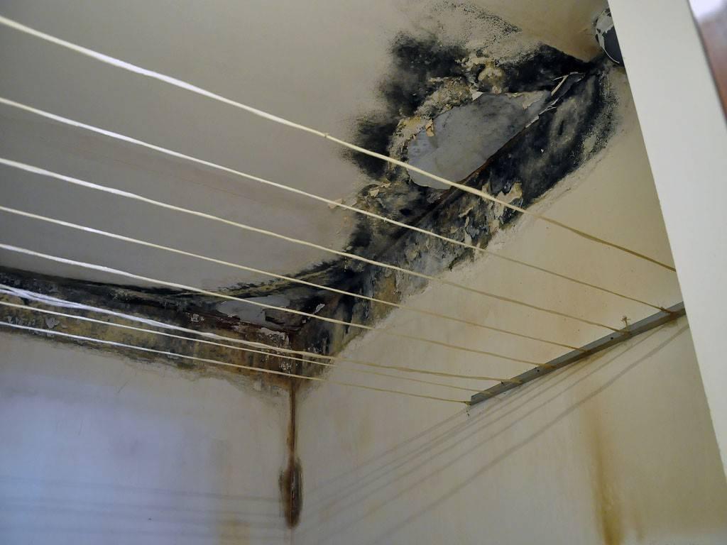 Как избавиться от домашнего грибка. как убрать плесень на стенах