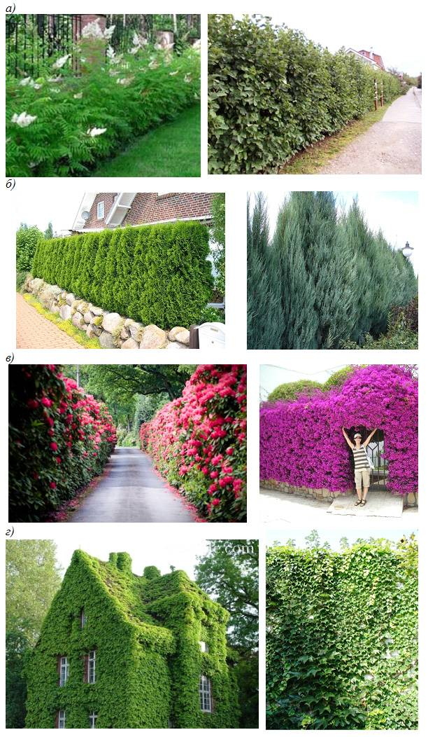 Обрезка кустарников, лиан и живой изгороди