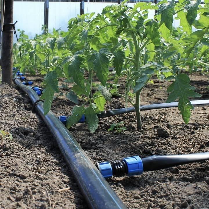 Автоматический полив газона своими руками: устройство и оборудование, правила и требования