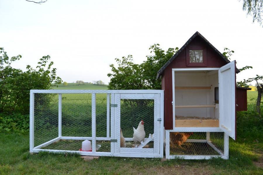 Как построить летний курятник своими руками за несколько дней