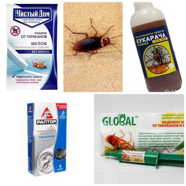 Народные средства от тараканов в квартире - самое эффективное
