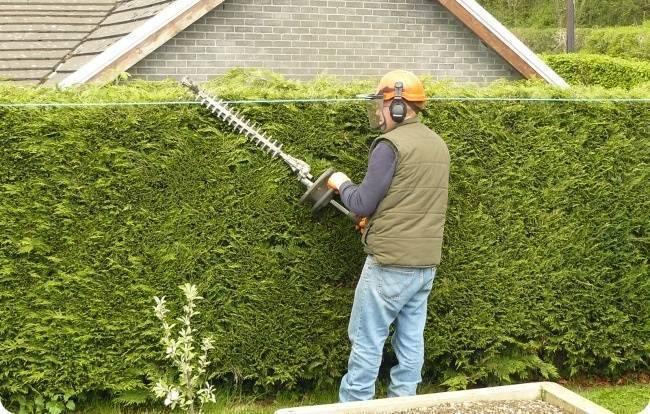 Живая изгородь +100 вариантов кустарников для ограды на фото