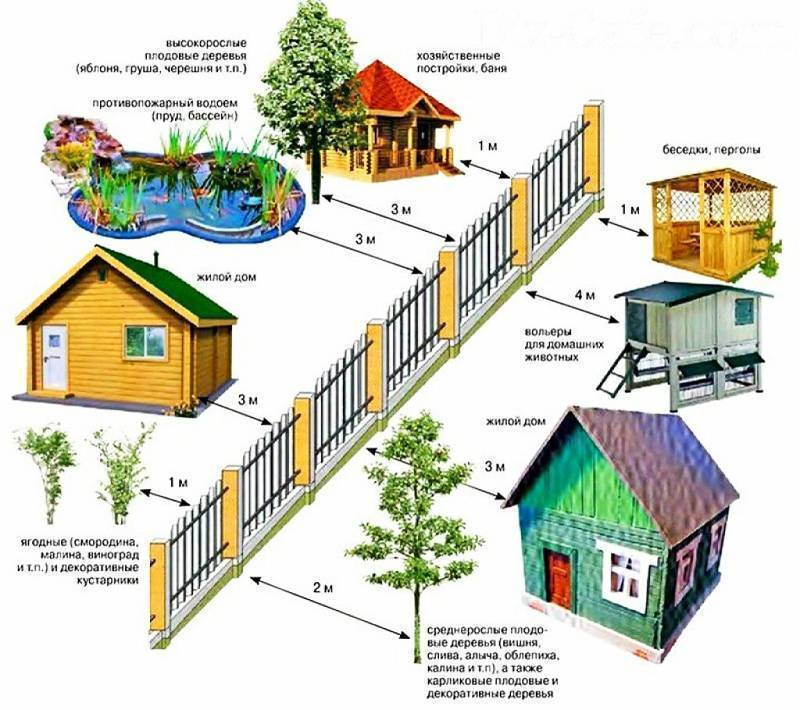 Санитарные нормы посадки деревьев от жилого дома