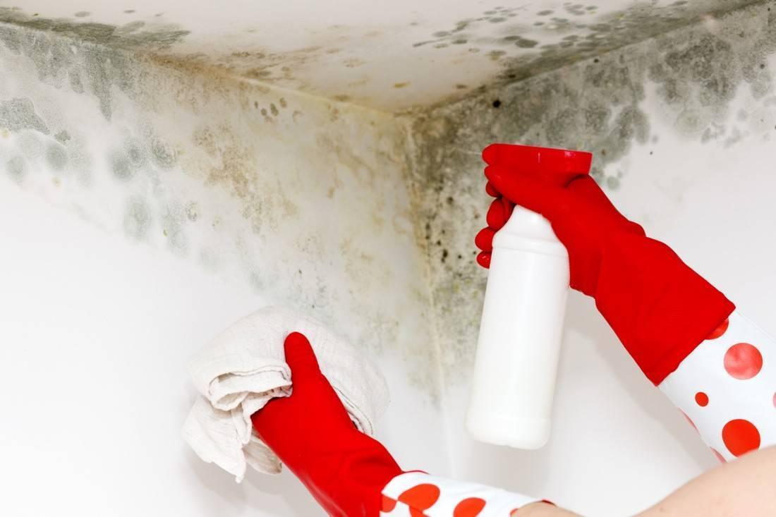 Как избавиться от плесени в домашних условиях: подборка 12 народных средств
