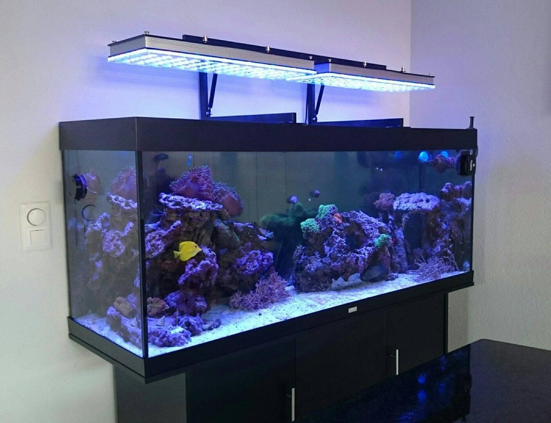Свет в аквариуме сколько должен гореть: нужна ли подсветка ночью или выключать его, продолжительность светового дня для аквариумных рыб