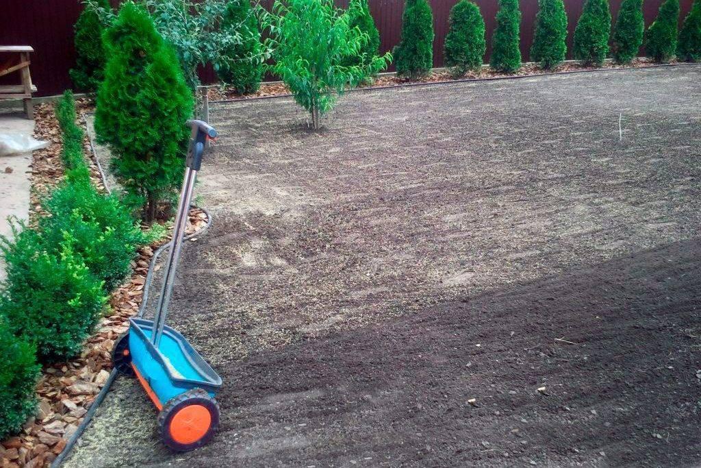 Как правильно посадить газон своими руками?