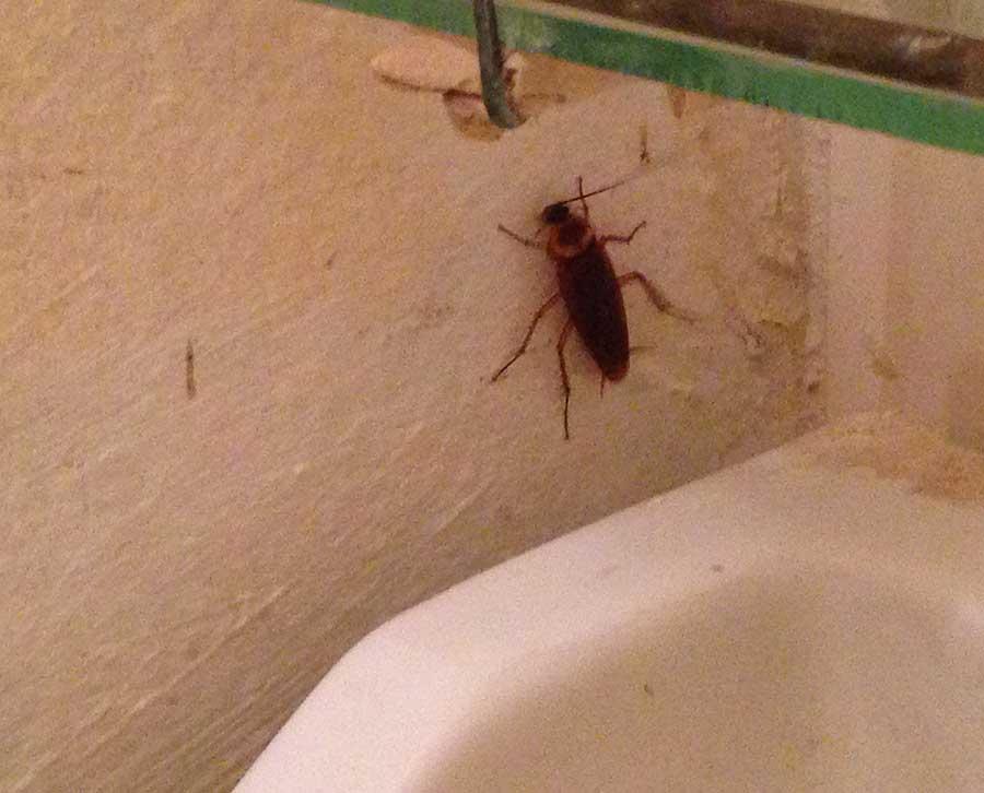 Что делать, если завелись белые насекомые в ванной?