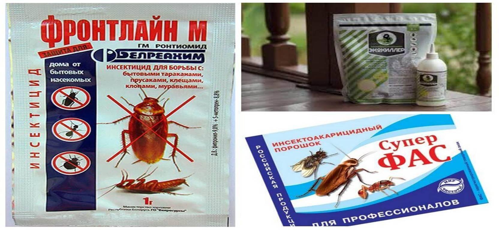 Самые эффективные средства от тараканов: лучшее в борьбе за квартиру