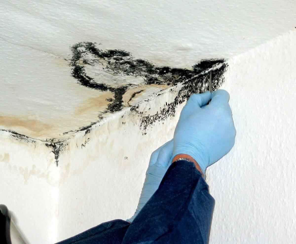 Плесень на потолке: как избавиться своими руками, фото и видео