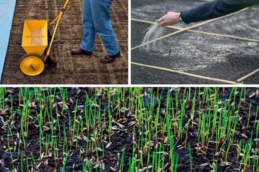 Как посеять газон осенью – все тонкости посадки и ухода | дизайн участка (огород.ru)