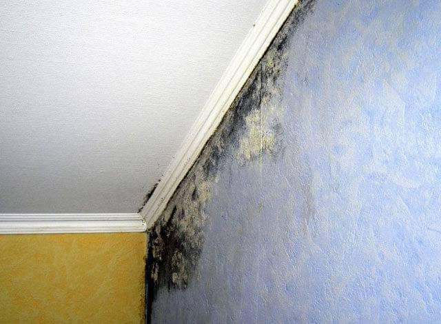 Плесень на стене в квартире: что делать, как избавиться от грибка