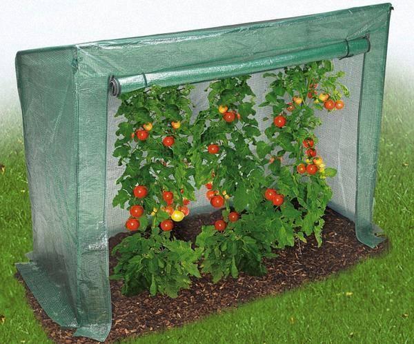 Как высаживать рассаду в теплицу и открытый грунт