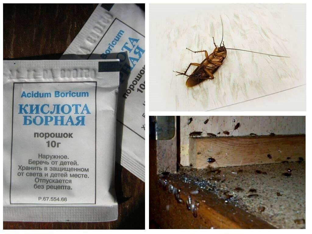 6 самых лучших средств от тараканов, какие народные способы хорошо помогают?