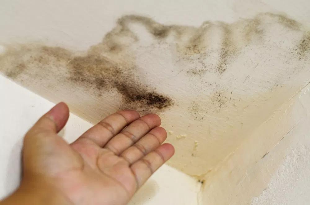 Плесень на потолке: эффективные средства и методы удаления грибка