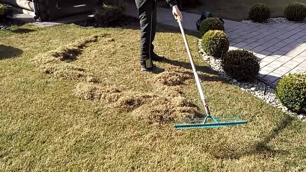 Как сажать газонную траву - подготовка участка под газон своими руками