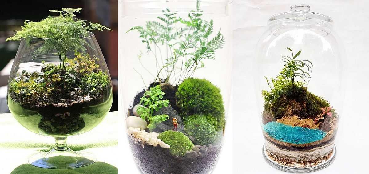 Флорариум своими руками: подбираем грунт, емкость, растения