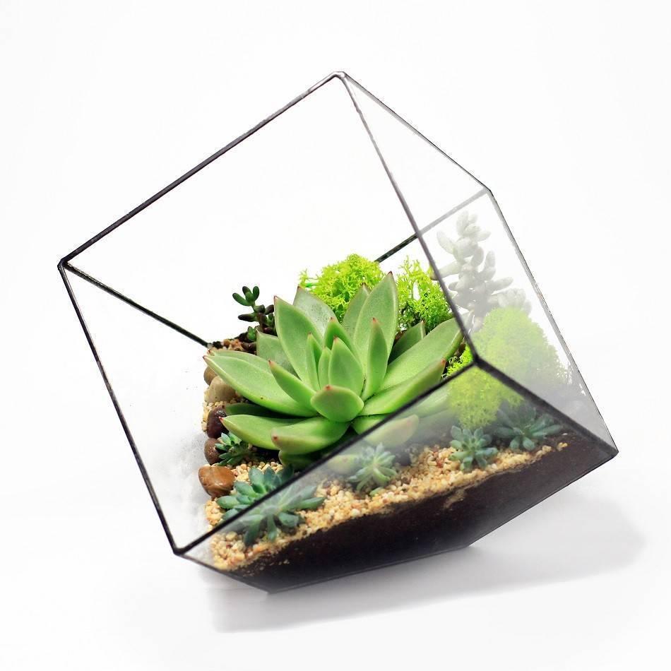Флорариум своими руками: мастер класс, фото, растения
