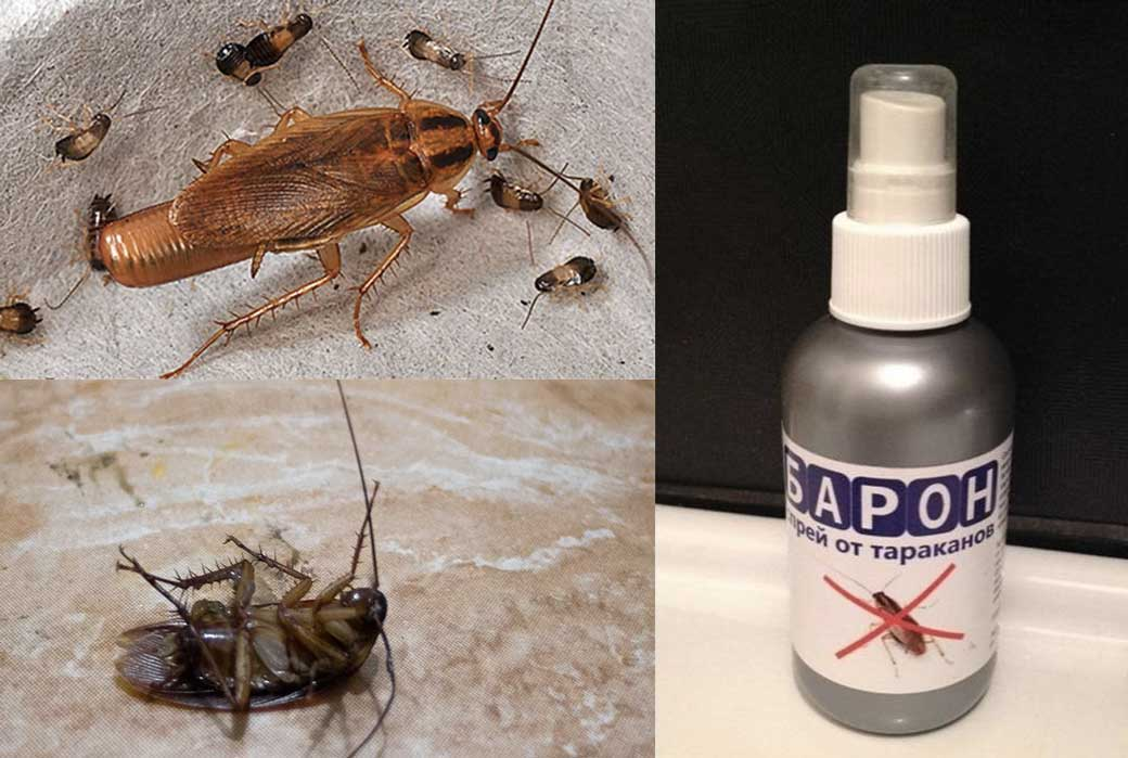 Народные средства от тараканов — всё самое эффективное