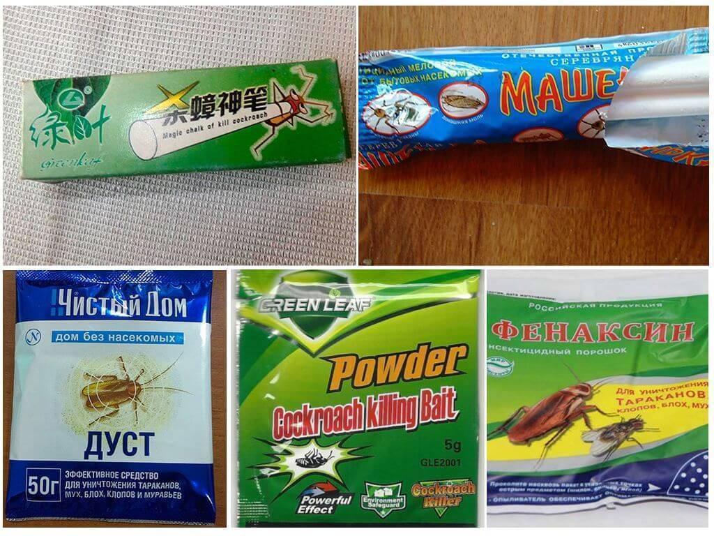 """Народные средства от тараканов в квартире: рецепты, как вывести """"усатых"""" навсегда, чего они боятся больше, чем травить эффективно и безопасно"""