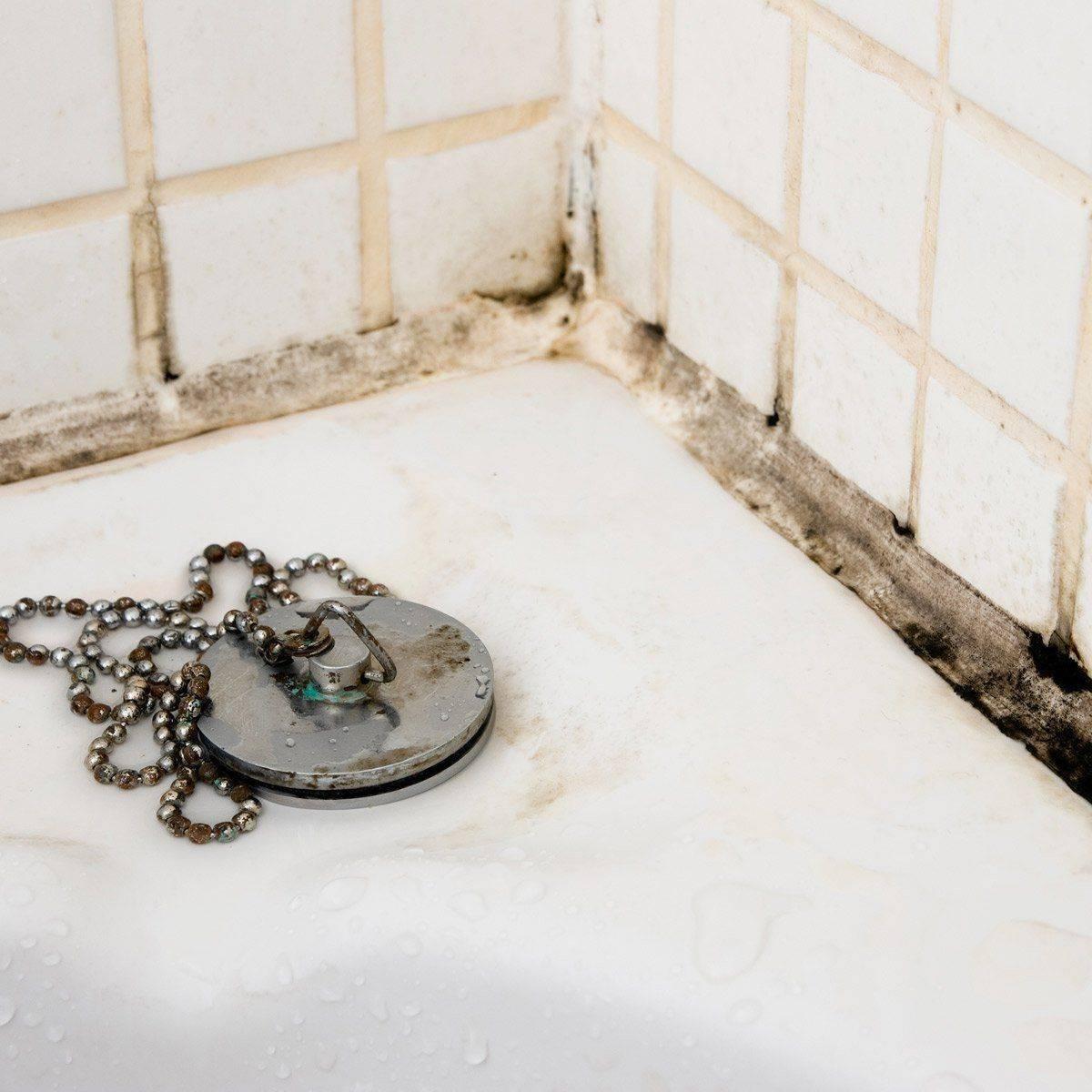 Плесень в ванной: как удалить средствами борьбы