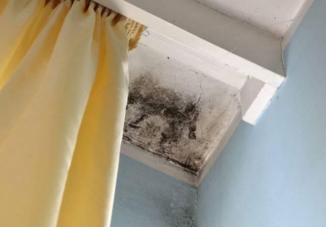 Как убрать плесень (грибок) со стен в домашних условиях своими руками