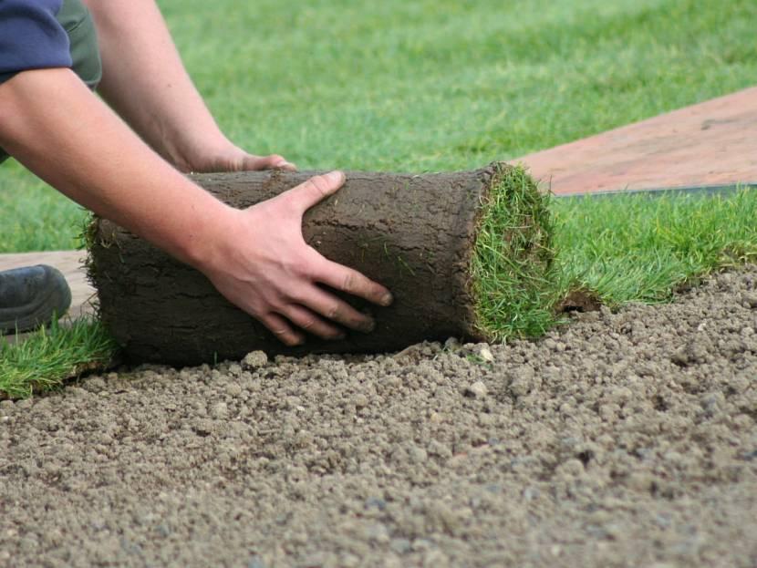 Как посеять газон своими руками, пошаговая инструкция