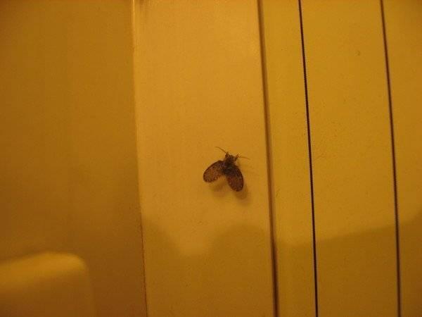 Чешуйница в ванной: как избавиться от неприятного насекомого
