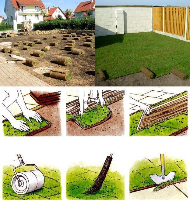 Газон своими руками: какую газонную траву купить, как и когда сеять. какой газон посадить на даче. как посеять газонную траву - советы.