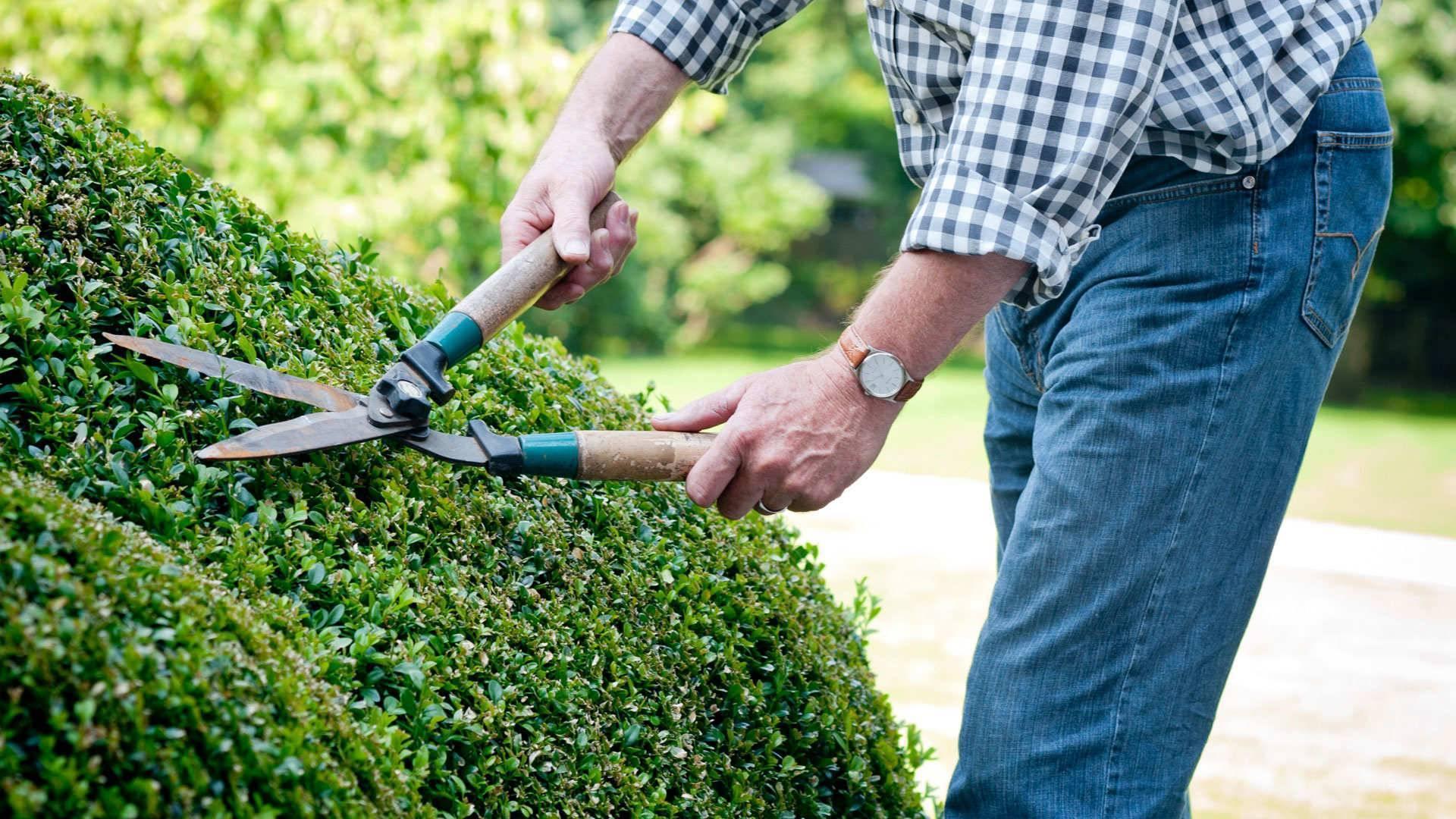 Живая изгородь на даче своими руками: какие растения - обзор, пошаговая инструкция!