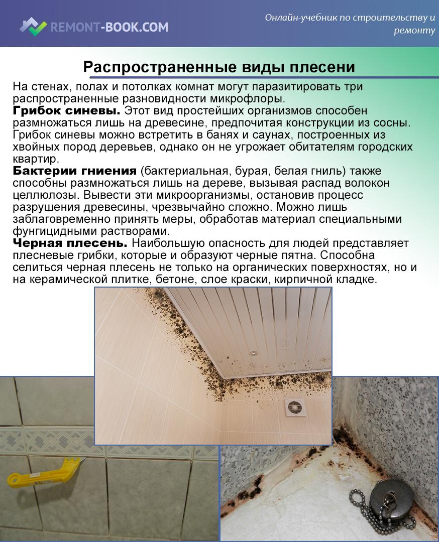 Как бороться с плесенью и грибком на стенах квартиры, средство удаления плесени. как избавиться от грибка на стенах