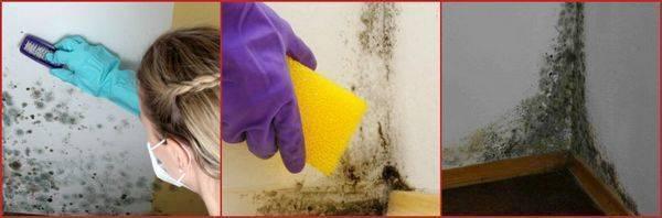 Как избавиться от плесени в квартире: причины появления грибка и методы выведения