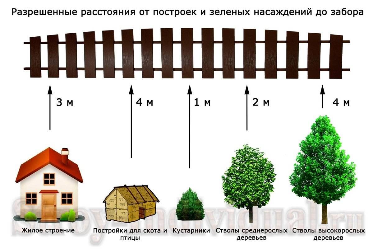 Расстояние от забора до деревьев – почему важно следовать снип, основные нормативы, правила высадки озеленения