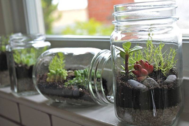 Флорариум для цветов - как сделать своими руками: пошаговая инструкция и видео об изготовлении