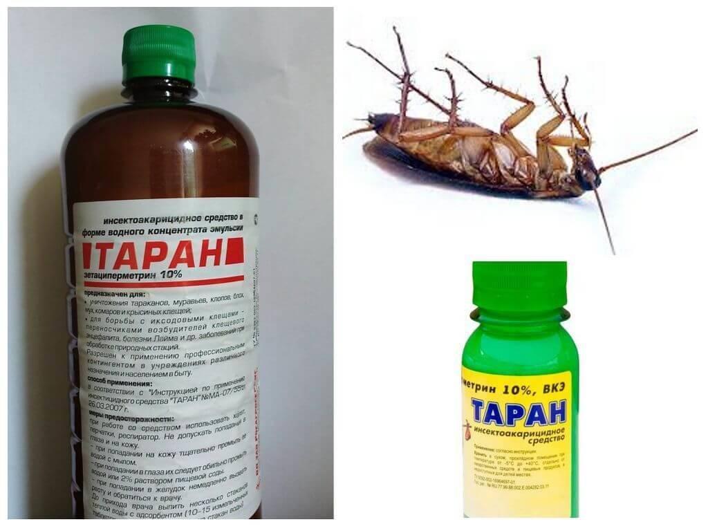 Народные средства от тараканов в квартире -  самые эффективные методы
