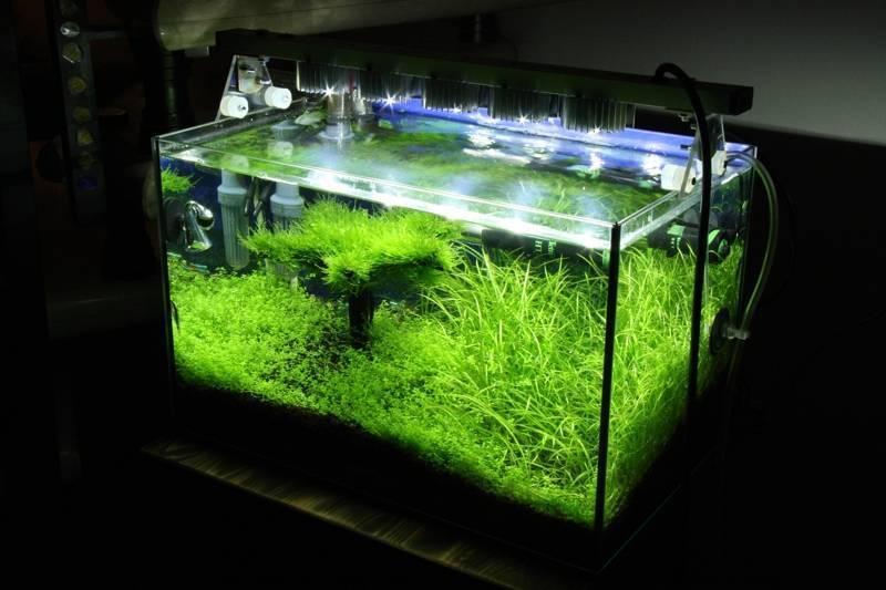 Светодиодный светильник для аквариума своими руками: как сделать крышку для аквариума с освещением, расчет подсветки, выбор ламп