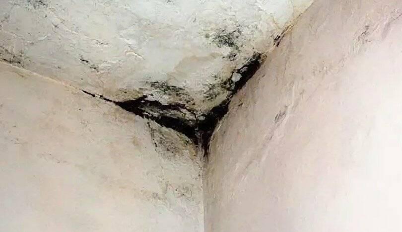 Как в частном доме или квартире избавиться от плесени и убрать грибок со стен своими руками в домашних условиях?