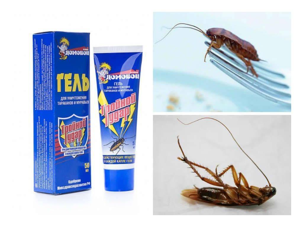 Как и чем травить тараканов в домашних условиях
