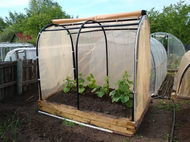 Парник своими руками: для огурцов, помидор, перца, рассады, в огород, на балкон – дачные дела
