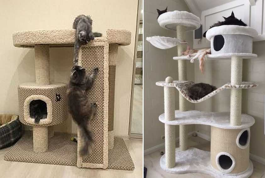 Домик для кошки и кота с отличиями своими руками: от биологии к реализации