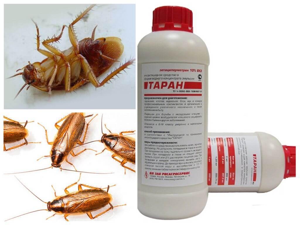 Самая эффективная отрава от тараканов: средства проверенные временем