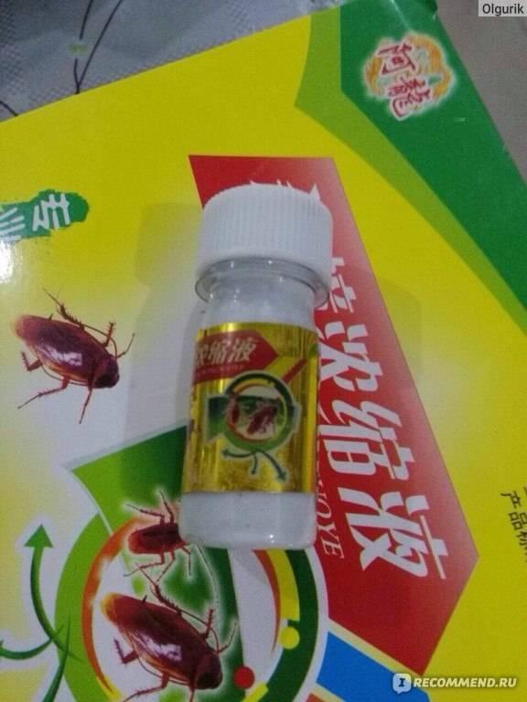 Чем травить тараканов в квартире самостоятельно: подручные средства