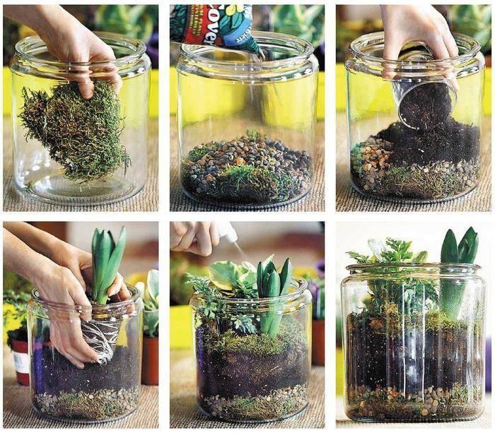 Как сделать флорариум своими руками и ухаживать за ним