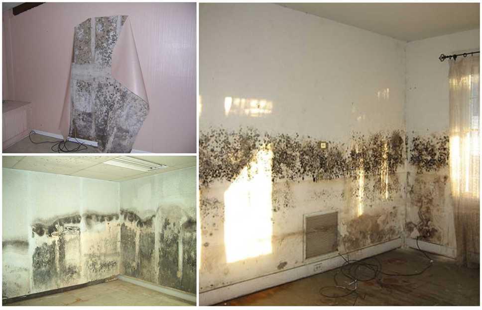 Как убрать плесень на потолке в квартире своими руками?