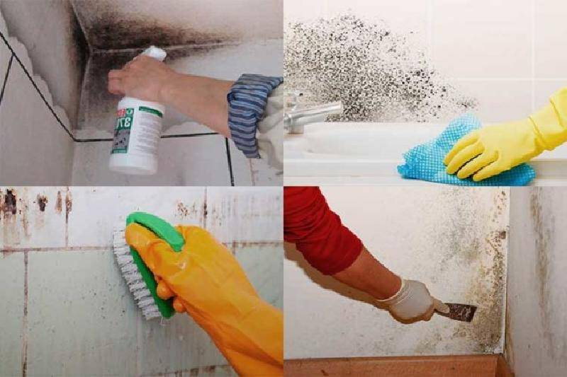 Как избавиться от грибка в ванной и удалить черную плесень с плитки
