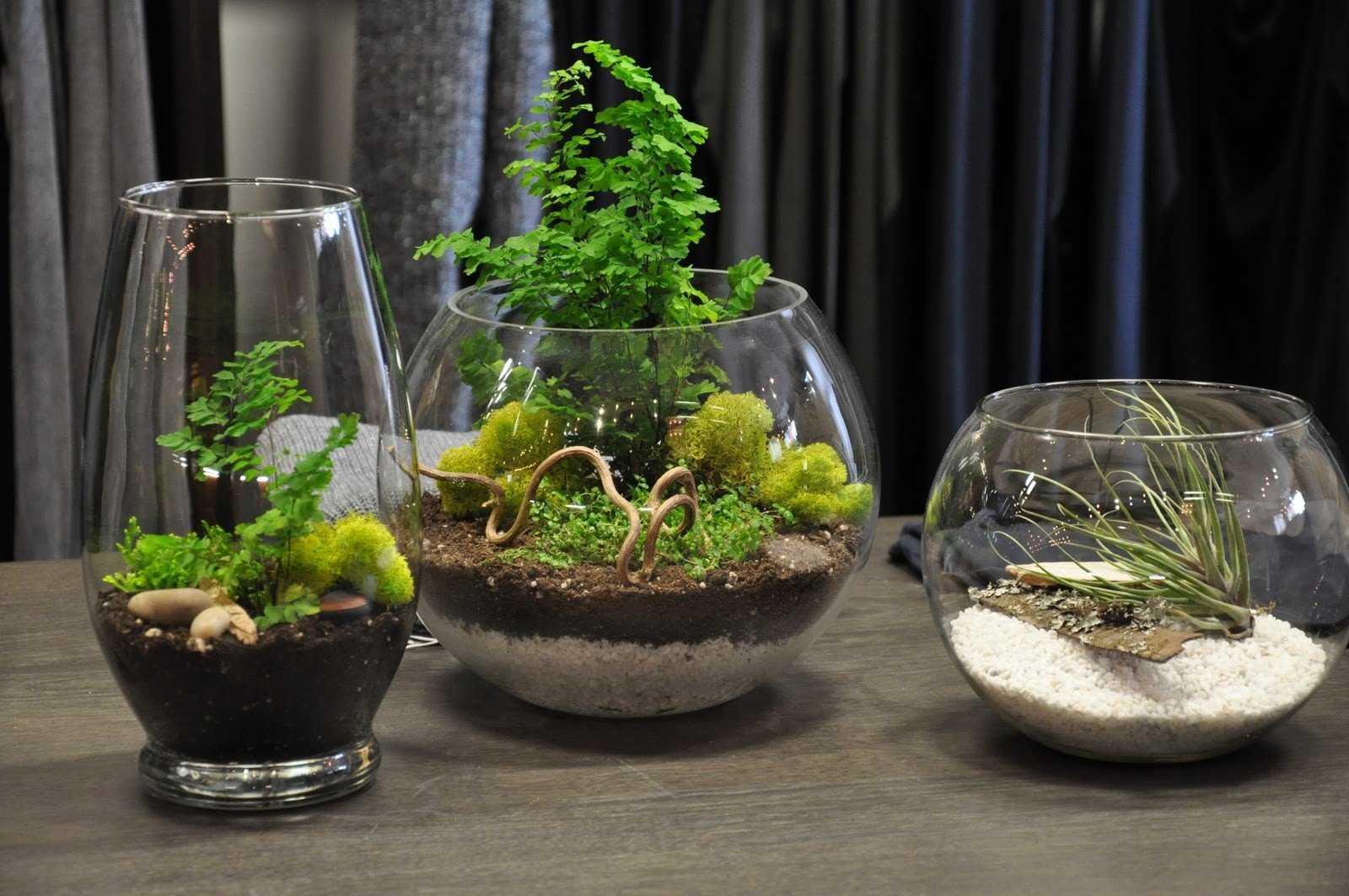 Флорариум своими руками: подбираем грунт, емкость, растения - каталог статей на сайте - домстрой