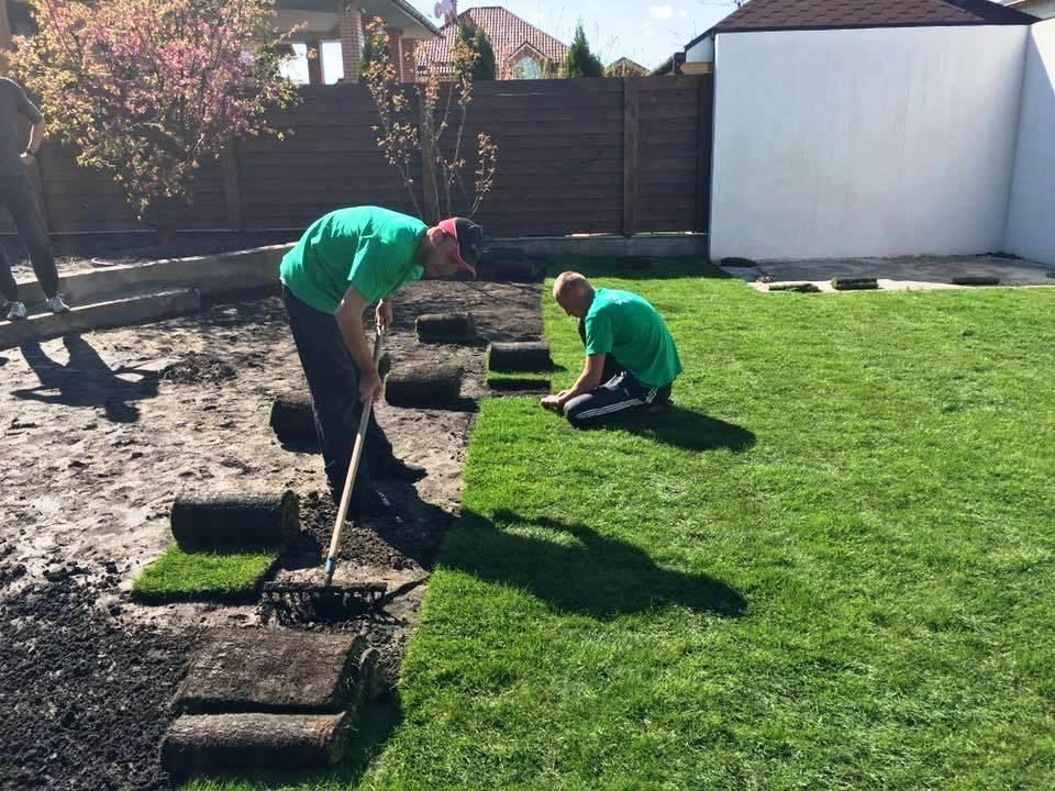 Как сделать газон на даче своими руками