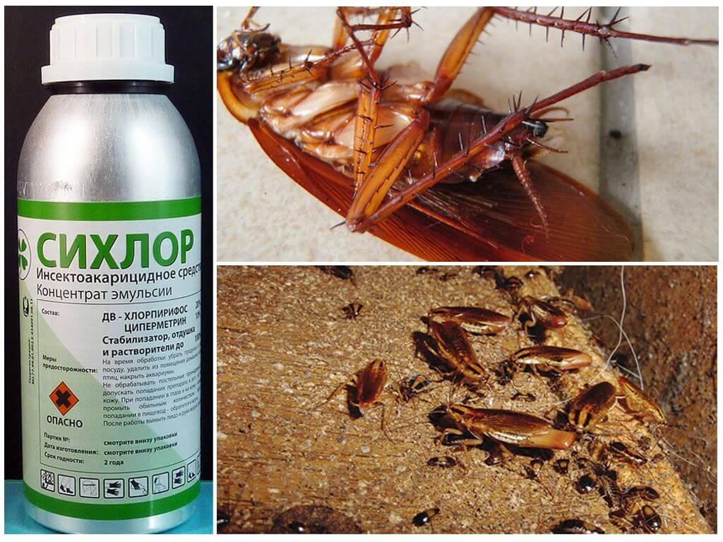 Самые эффективные средства от тараканов в квартире: промышленные, бытовые, народные