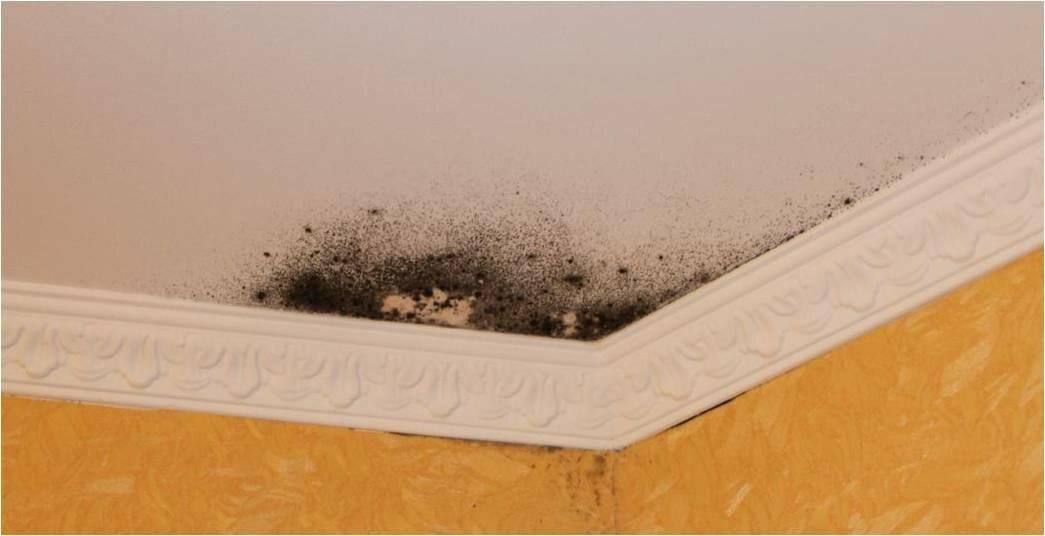 Как убрать плесень со стены в квартире раз и навсегда: действенные способы