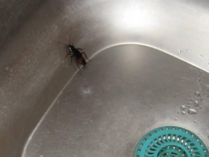 Как уничтожить канализационных мух: 6 лучших средств