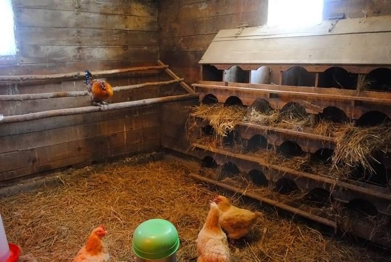 Зимний курятник своими руками. строительство теплого курятника для зимы | строй-фулл